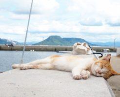 熱中症と猫